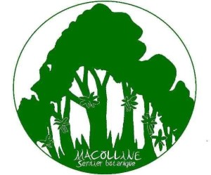 macolline logo original